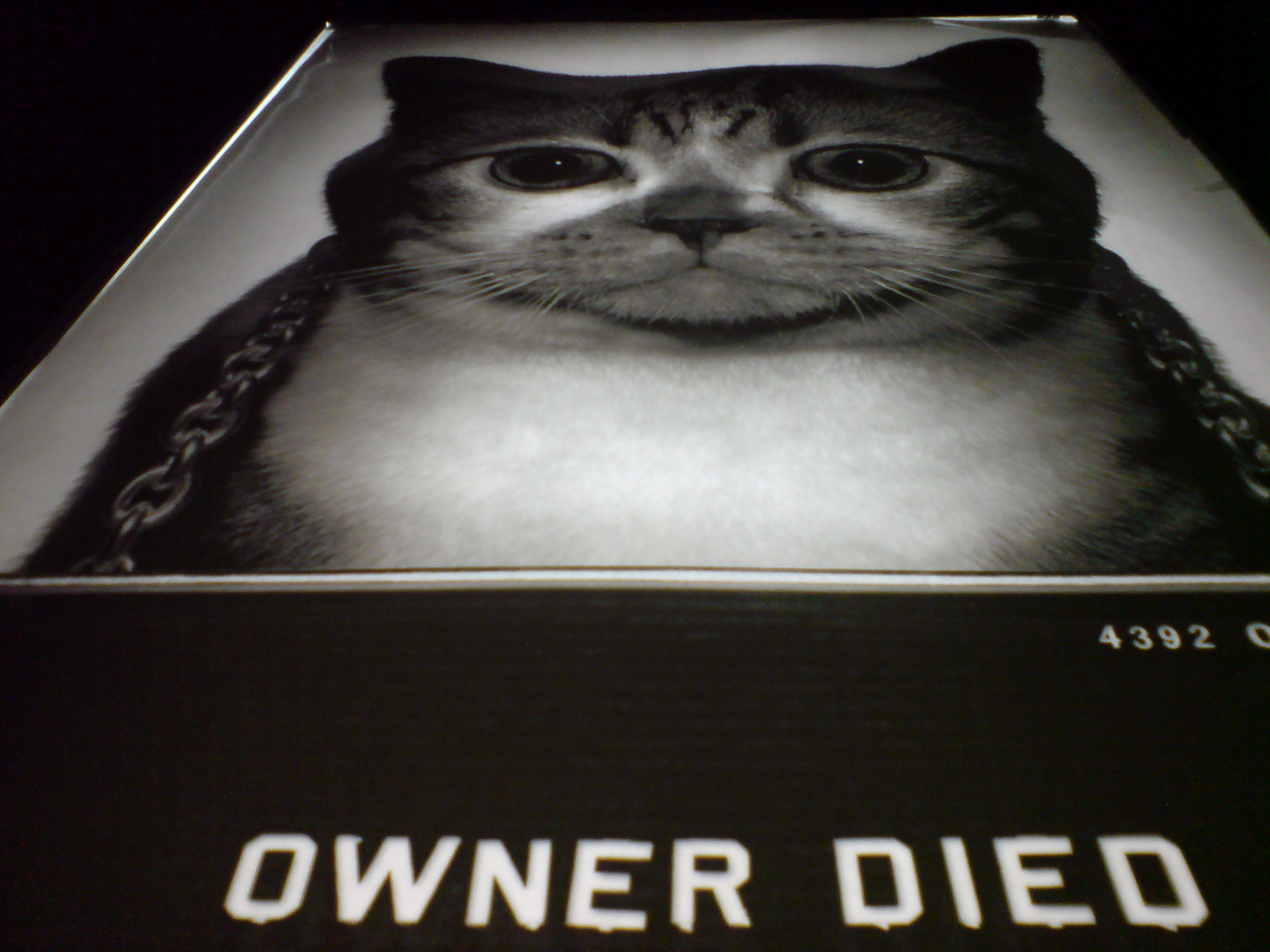 Fat cat owner died